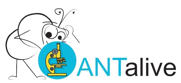 ANTalive Logo